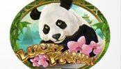 Lucky Panda Spielautomat.